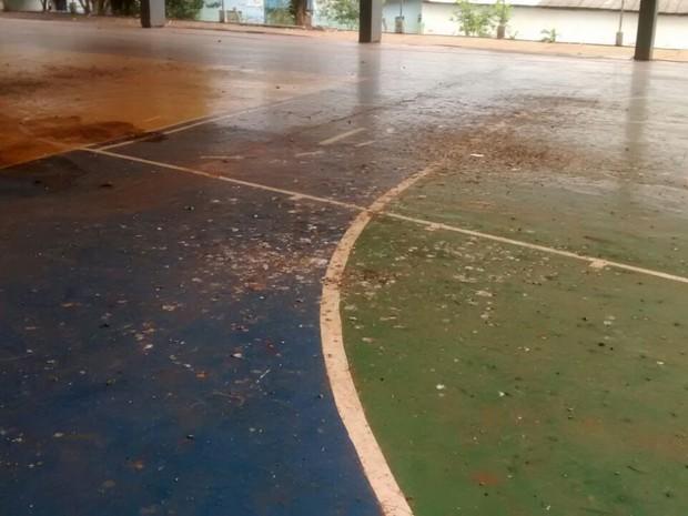 Infestação de pombos pode interditar única escola estadual de Nova Cantu.