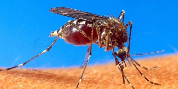 Quase 80% das cidades do Paraná já registraram casos de dengue